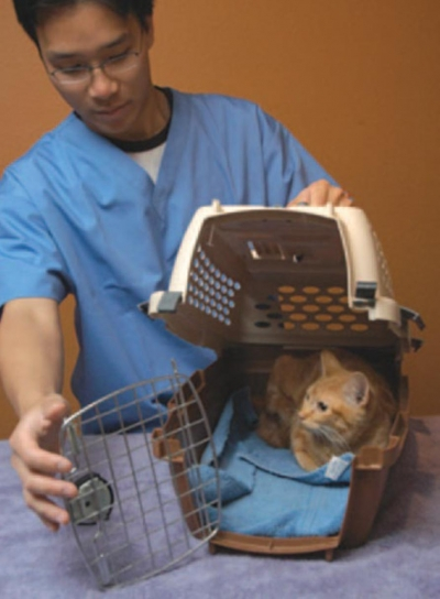 Preparing for the Visit to the Vet: Carriers