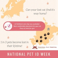 Pet ID week is here – Keep your cat safe!
